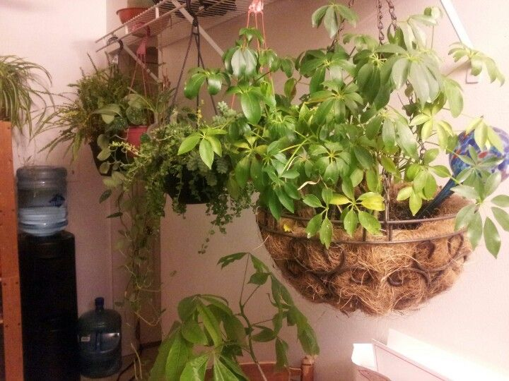 63 Best House Plant Display Images On Pinterest Indoor