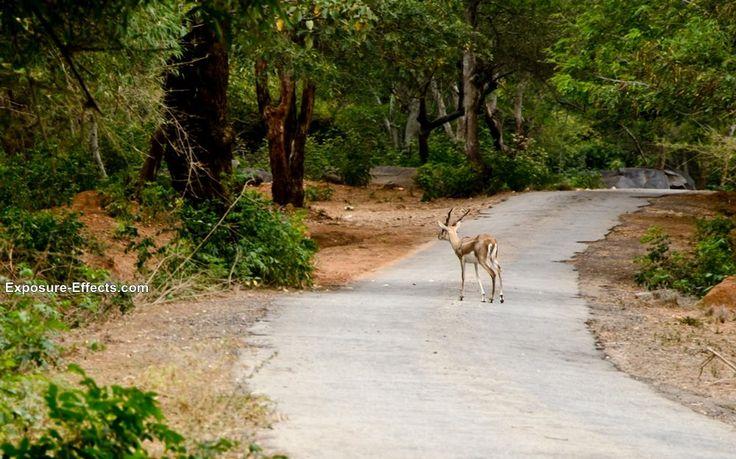 Bannerghatta - Bangalore Jungle Lodges & Resorts