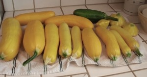 Recipes to use up your summer squash.