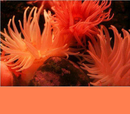 Coral color combinations