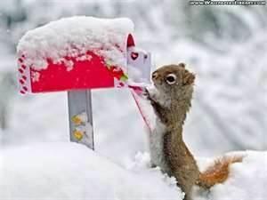 christmas animals -letter to santa.