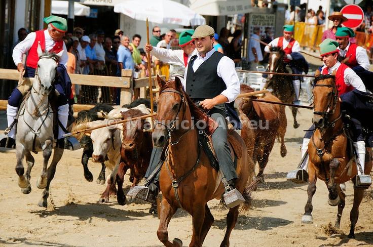 Traditional running of wild bulls in Alcochete, Portugal
