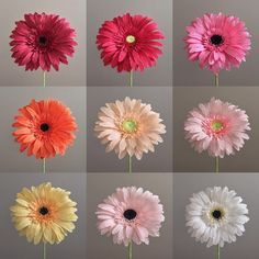 They're here! Gerber daisies have been added to my Etsy shop! #nectarhollow