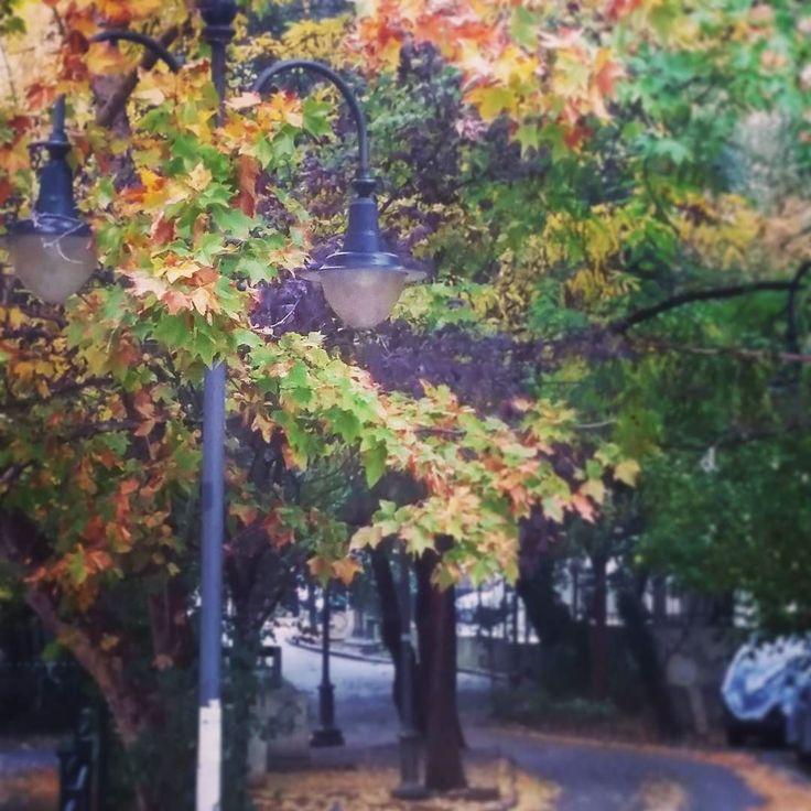 Πάντα υπάρχει κτ όμορφο κοντά σου... Αρκεί να έχεις τα σωστά μάτια για να το δεις... #fall #trees #thessaloniki #rain