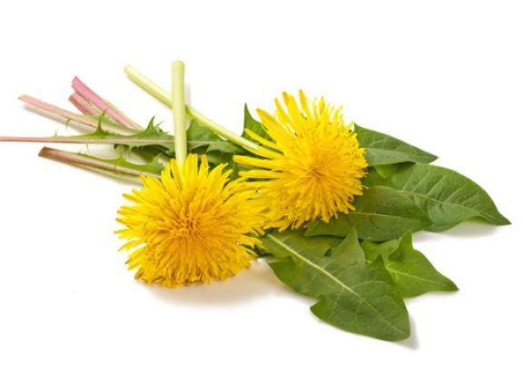 Gesund und völlig umsonst! Diese sieben essbaren Wildpflanzen sollten Sie pflücken und probieren. Die besten Rezepte für Wildkräuter und essbare Blüten. - Seite 2 | EAT SMARTER