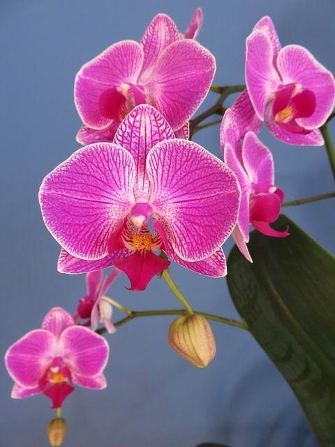 17 meilleures id es propos de rempotage orchid e sur. Black Bedroom Furniture Sets. Home Design Ideas