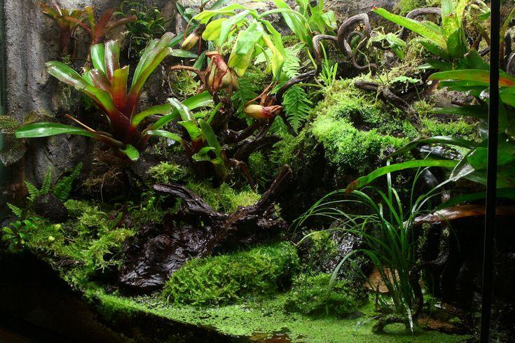 90 gallon vivarium pic heavy page 3 orchid board for Forum habitat plus