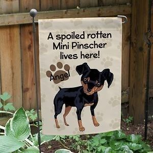 356 Best Min Pin Pins Images On Pinterest Pets Dog