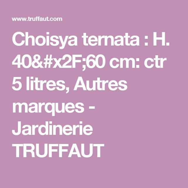 Choisya ternata : H. 40/60 cm: ctr 5 litres, Autres marques - Jardinerie TRUFFAUT