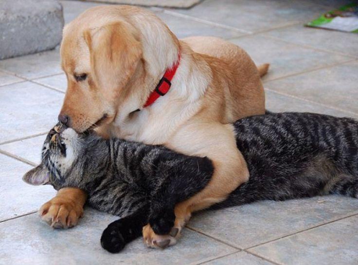 Ποιος είπε πως δεν υπάρχει φιλία ανάμεσα στον σκύλο και την γάτα;;;