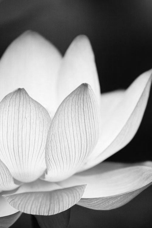 sugarkane444:  0hmm:  This small life that you have got can be turned into a paradise. This very earth is the lotus paradise… http://youtu.be/8L1Fxi5Beo4 oohhmm…ॐ  That of a lotus
