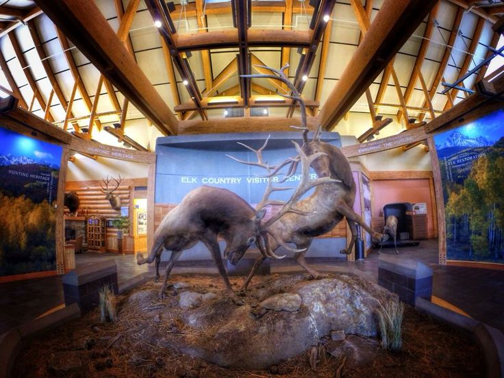 Elk mount fireplace - photo#49
