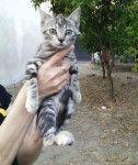 GATTI gattini(2-3 m.mesi circa)tigrati,cercano casa.