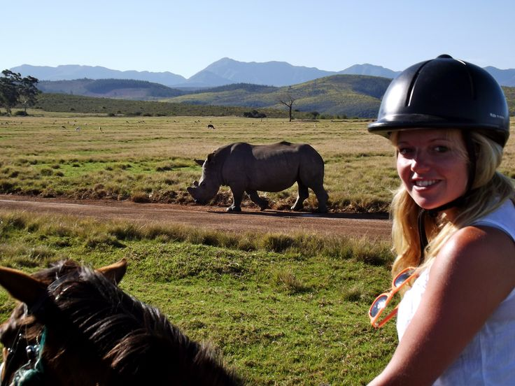 Rhino, Horseback Safari, Plettenberg Bay, South Africa