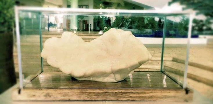 Самая большая жемчужина в мире весит 34 килограмма!