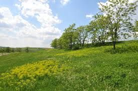 Image result for landfill tree planting