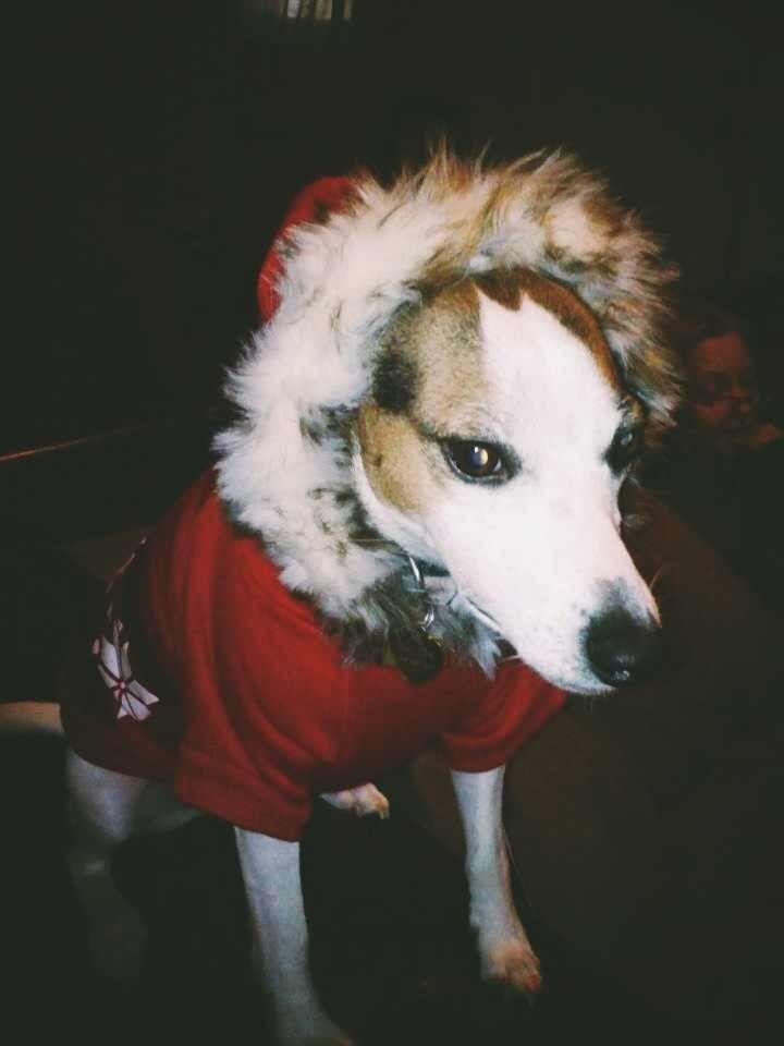 Hazard was not impressed with his winter coat.