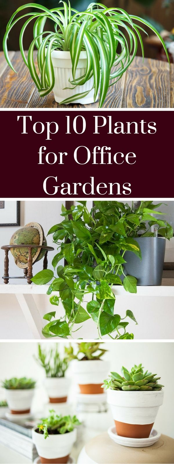 Top 10 Plants for Office Gardens