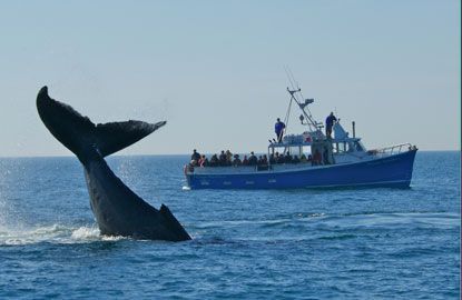 It's time to head to Nova Scotia this summer! Here's 5 reasons why - including the chance to board a naturalist-led #whale-watching cruise from Long Island or Brier Island. #NovaScotia