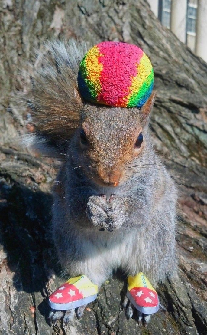 Best Squirrels Images On Pinterest Nature Adorable Animals - Student befriends campus squirrels then dresses them in the cutest outfits ever