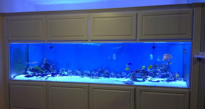Best 25 300 gallon aquarium ideas on pinterest 20 for Acrylic fish tank