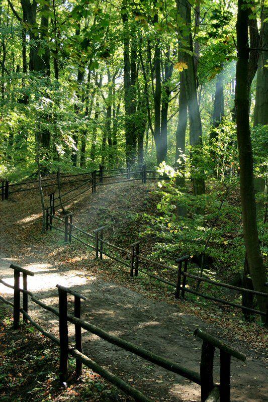 Puszcza Bukowa (Beech's Forest) near Szczecin