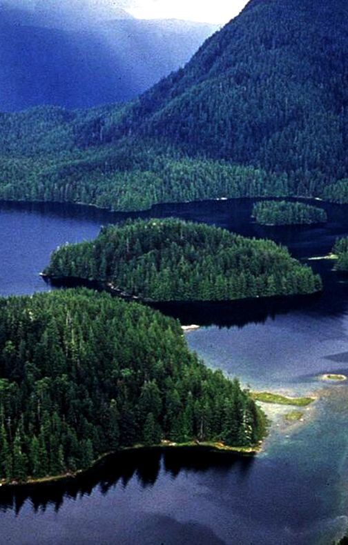 Great Bear Rainforest is one of the largest tracks of unspoiled temperate rainforests left on earth. British Columbia, Canada.