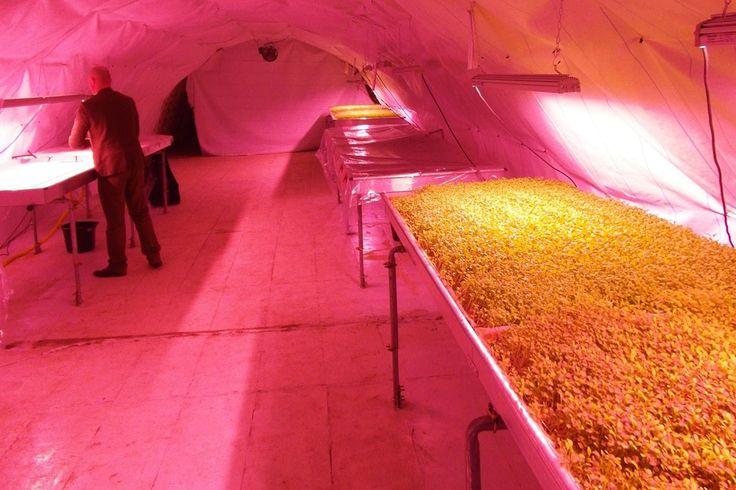 Tutto è pronto nel sottosuolo londinese per l'avvio di un'azienda agricola ecosostenibile che produrrà erbe e verdure. Si chiama Growing Underground ed è u