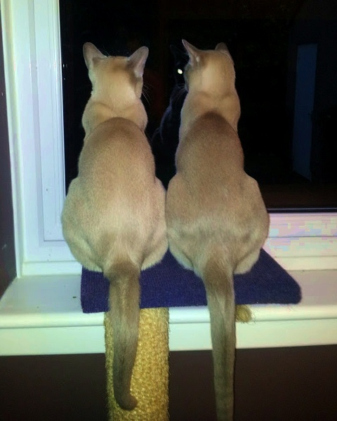 Wonder what mischief we can get up to out there???