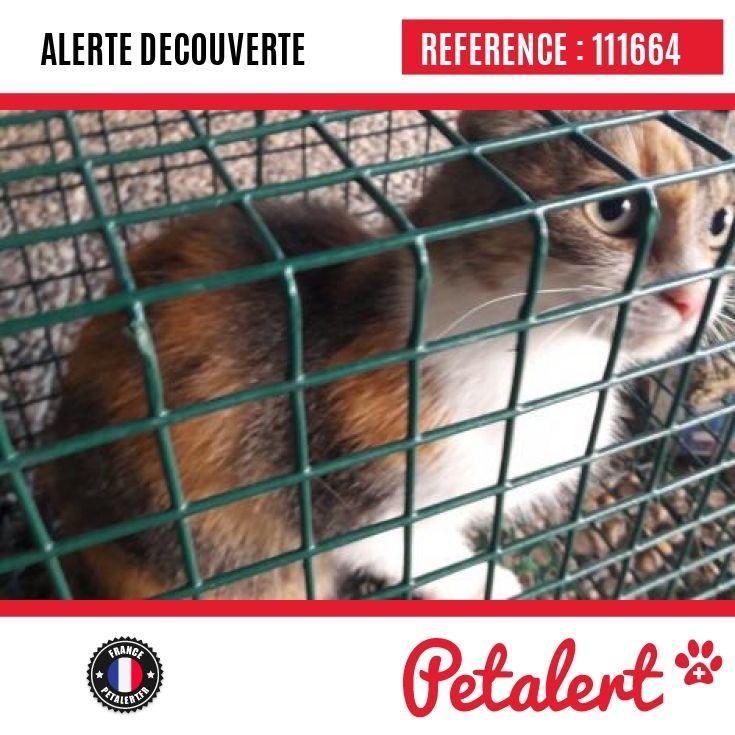 12.09.2017 / Chat / Bellegarde-sur-Valserine / Ain / France
