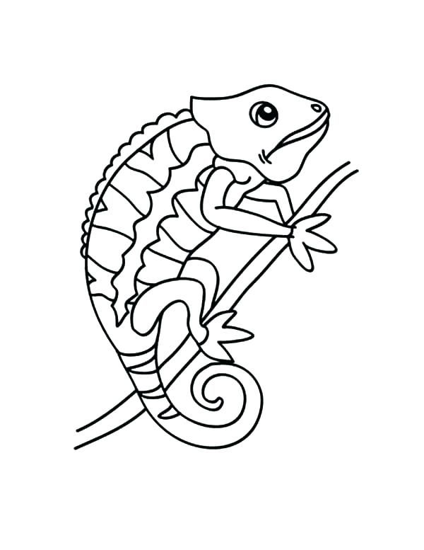 Free Printable Chameleon Coloring Pages Chameleons Changing Color Chameleo Kameleon Reptielen Kleurplaten