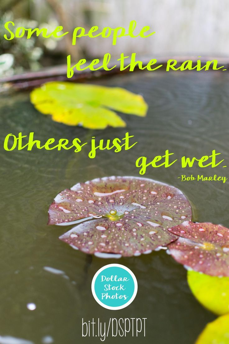 Some people feel the rain.  Others just get wet. - Bob Marley    Find stock photos of rain at Dollar Stock Photos