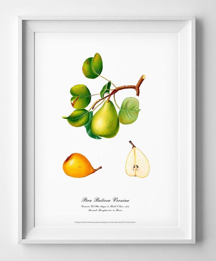 Watercolour wall art Botanical poster of Pear vintage antique geclee art print  #Vintage