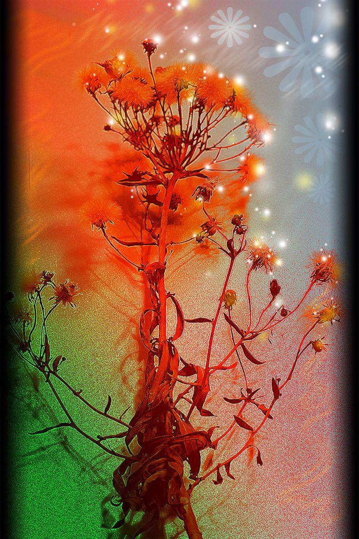Sparkles - Tähtiä kukassa