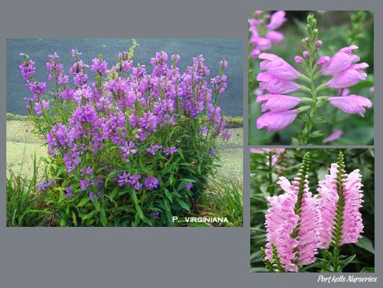 226 best perrenial flower garden sun english cottage ...