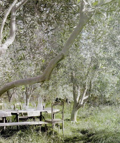 37 best Olive images on Pinterest   Olive oil, Olives and Olive oils