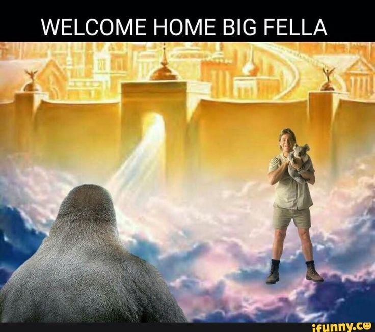 welcome, home, harambe, steveirwin