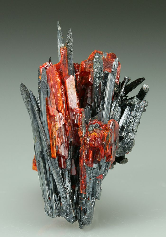 STIBNITE with REALGAR Minerals from Baia Sprie, Maramures Co, Romania Spiky terminated prismatic crystals of metallic dark grey Stibnite form two inter grown open divergent clusters. Grown between the crystals of Stibnite are orange to red blocky crystals of Realgar. An uncommon combination from Baia Sprie (probably No. 5 Mine) Romania around late 2005.