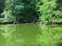 Die Graureiher vom Bramfelder See