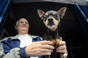 What Pet Owners Need to Know about Dog Sitting Rates
