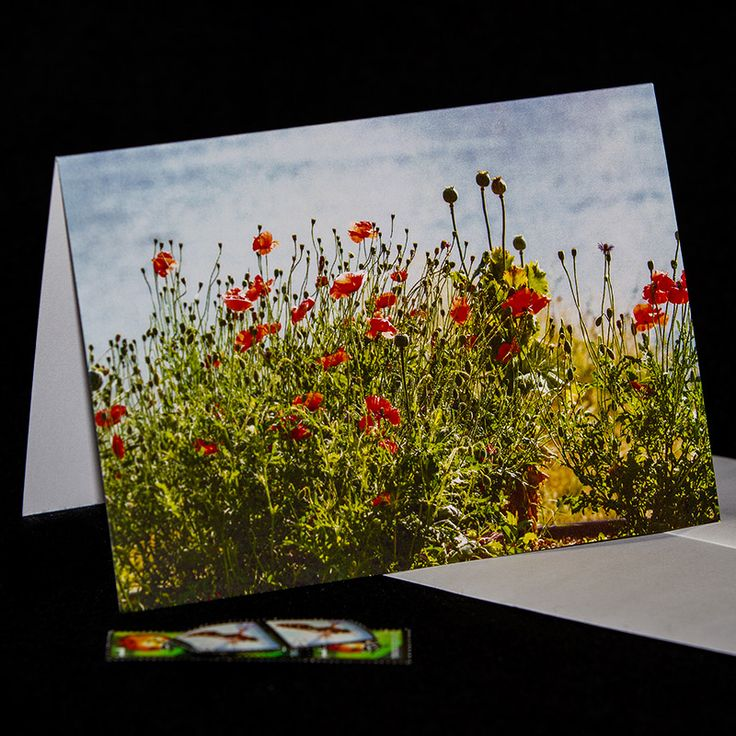**20% OFF** everything - photo greeting cards & photo digital downloads! Click here: https://www.etsy.com/ca/shop/TanyaDeLeeuwPhoto?ref=hdr_shop_menu