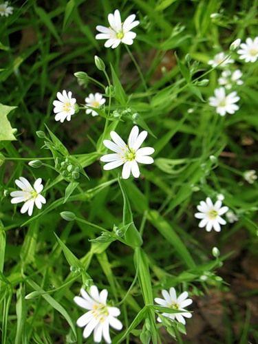 Лесные цветы фото и названия
