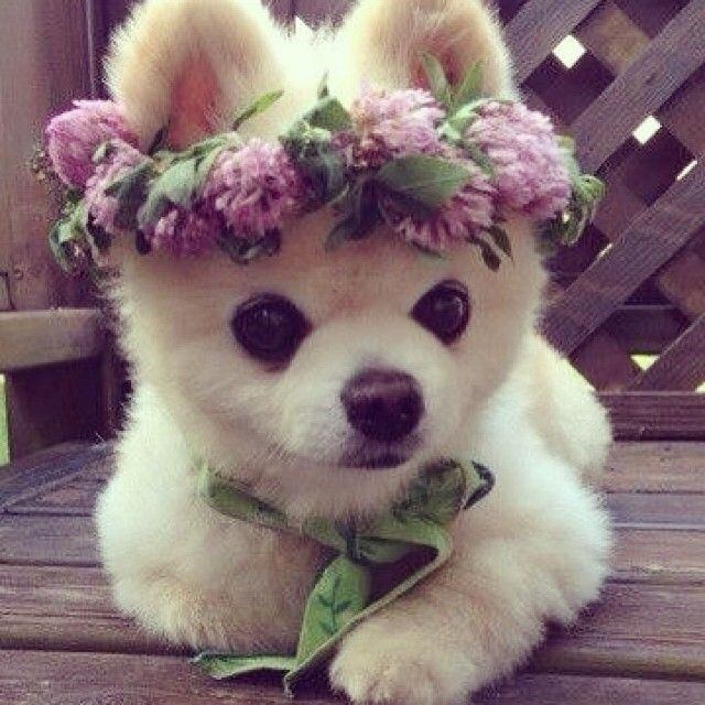 this dog is prettier than me. And I'm okay with that because its so adorable
