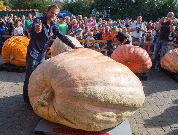 World's Heaviest Pumpkin (2,096 Pounds)