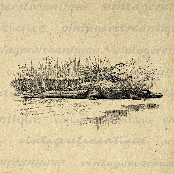 Crocodile Image Digital Printable Crocodile Illustration Art