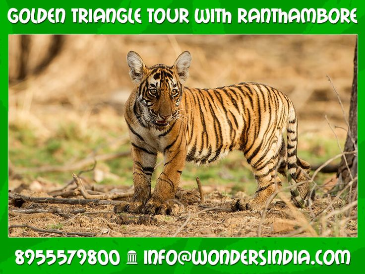 Golden Triangle Tour with Ranthambore Duration: 6 Nights / 7 Days Destinations Covered: Delhi – Agra – Ranthambore – Jaipur – Delhi