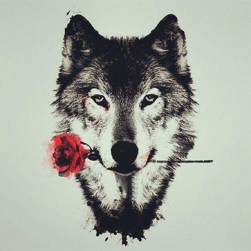 wolf, rose, and red Bild                                                                                                                                                                                 Mehr