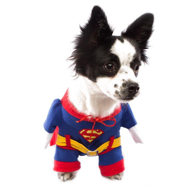 Indy is feeling a little super today. #superdog #feelingsuper #superman #dog #dogs #papillion