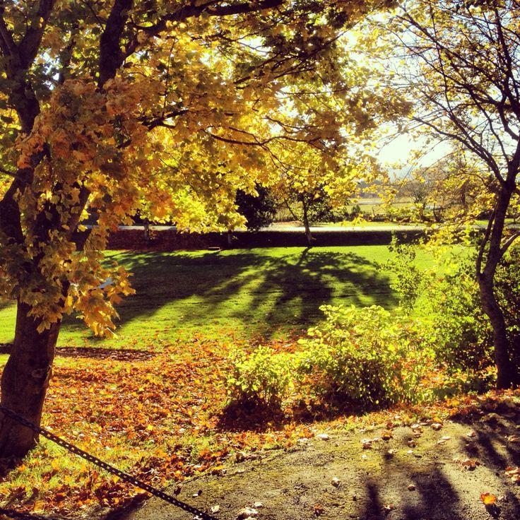Autumn nature in Norway