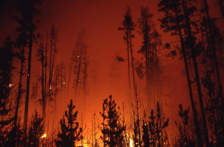 This Retro Report video looks at the enormous wildfires that defied the formulas and changed firefighting policy in the West.